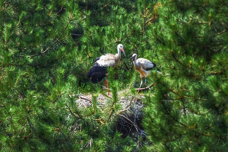 Stork Nest Storks In The Wild Storks Bird Perching Tree Water Animal Themes Grass Green Color Young Bird Nest Animal Nest The Great Outdoors - 2018 EyeEm Awards