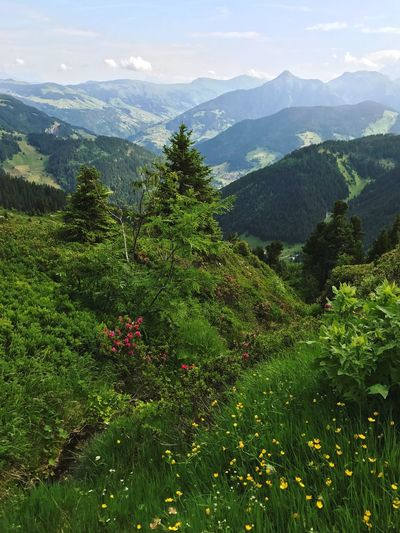 France Alps Mountain Range Pine Tree Mountain Nature Beauty In Nature Growth Landscape No People Sky Green Color Day Outdoors Scenics Tree