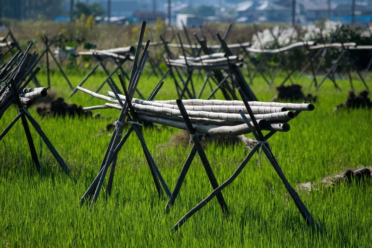 Structures On Rice Field