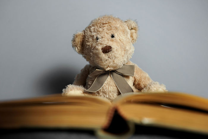 ExamWeek Learning Book Childhood Close-up Day Education Indoors  Learn No People Selective Focus Stuffed Toy Teddy Bear Toy
