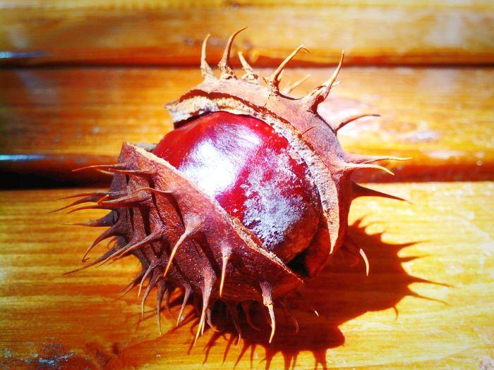 Chestnut...