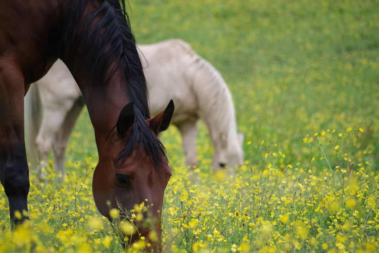 Eat together EyeEm Selects Grazing Safari Animals Eating Beauty Meadow Close-up Grass Animal Body Part Hoofed Mammal Horse Herbivorous Pony Livestock Animal Pen Paddock Horseback Riding Mane HEAD Ear