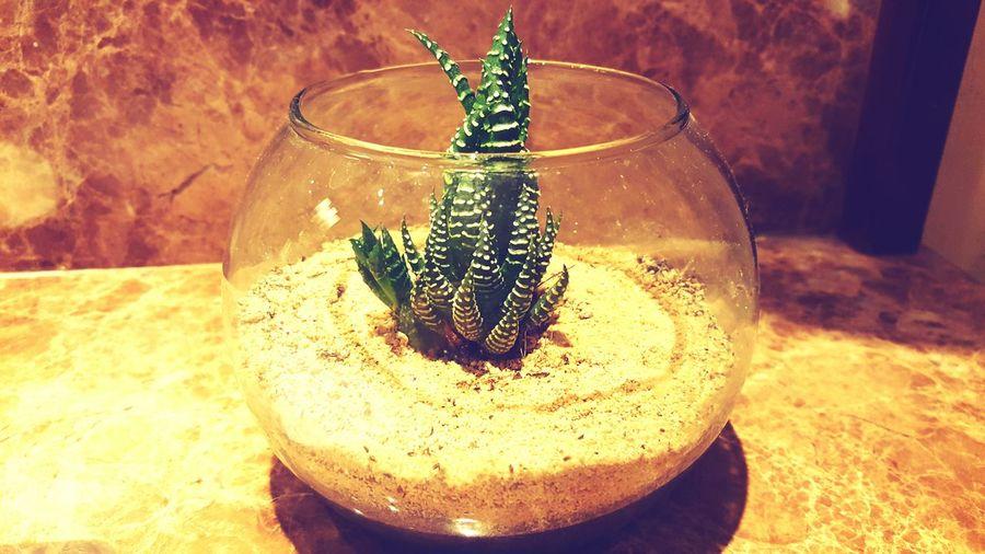 Decor Plant Green Sand