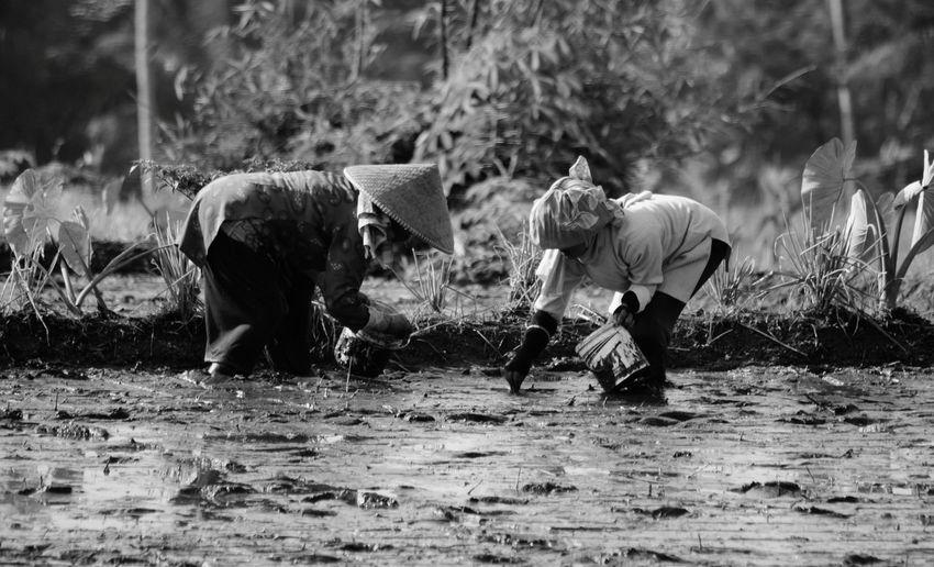 Farmers working in muddy field at farm
