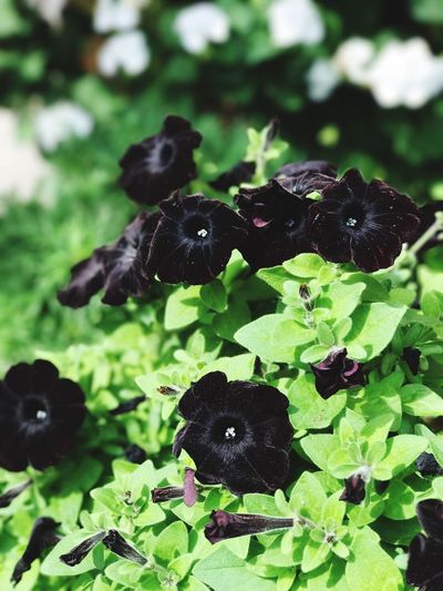 Black flower Black Color Animal Themes Nature No People Leaf Animals In The Wild Plant Day Bird Outdoors Close-up Mammal Freshness