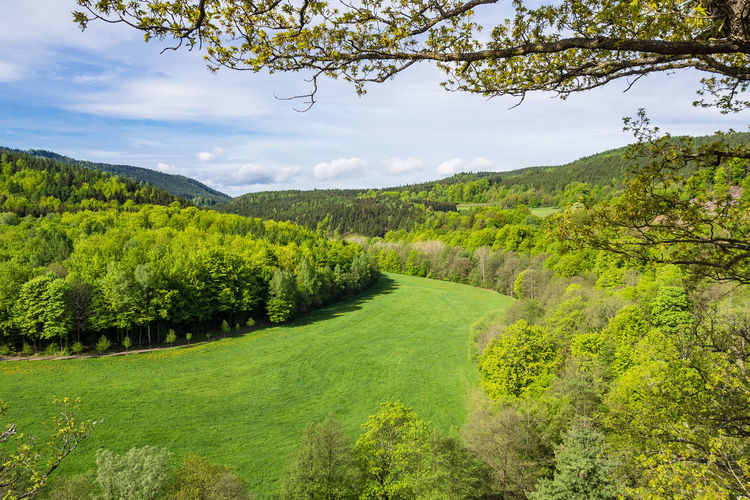 Landscape in the Thuringia Forest. Thuringia Thuringian Forest Beauty In Nature Day Forest Grass Green Color Growth Idyllic Landscape Meadow Mountain Nature No People Outdoors Scenics Sky Tranquil Scene Tranquility Tree