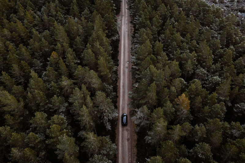 High angle view of pine trees in forest