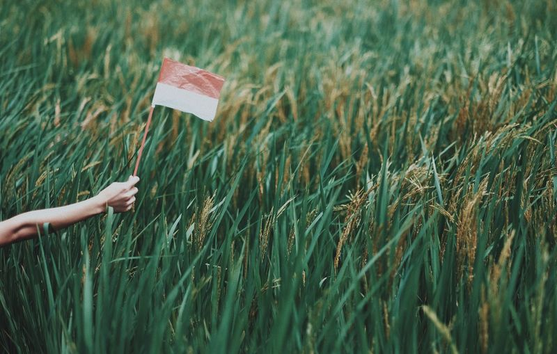 Cropped hand holding flag over plants
