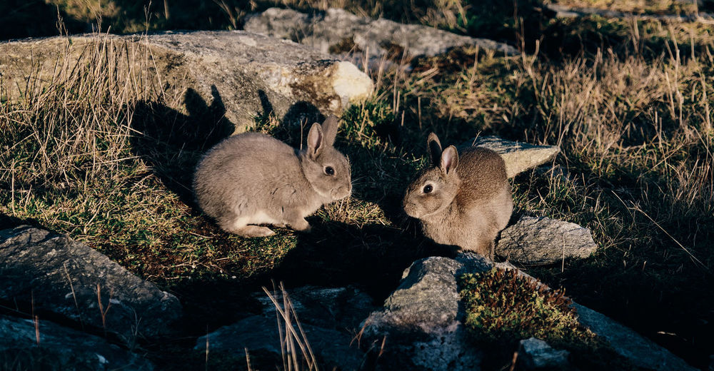 Close-up of rabbits on rock