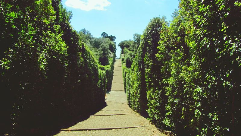 Boboli Garden Boboli Boboligardens Garden Garden Photography Nature Nature Photography Green Italy Day Outdoors Walking To The Sun