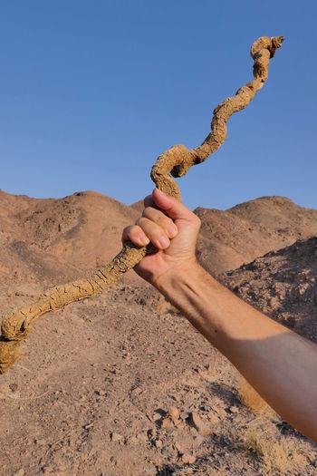 Human hand holding desert against clear sky