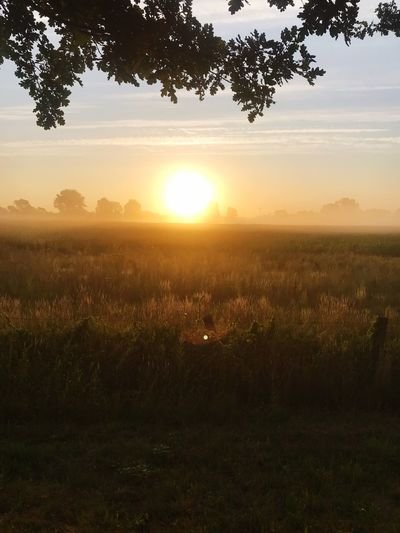 Sunrise in nature Tree Sunset Beauty In Nature Sky Scenics - Nature Plant Tranquil Scene Tranquility Landscape Field Sun Sunlight Environment Idyllic Growth No People Orange Color Land Nature Silhouette