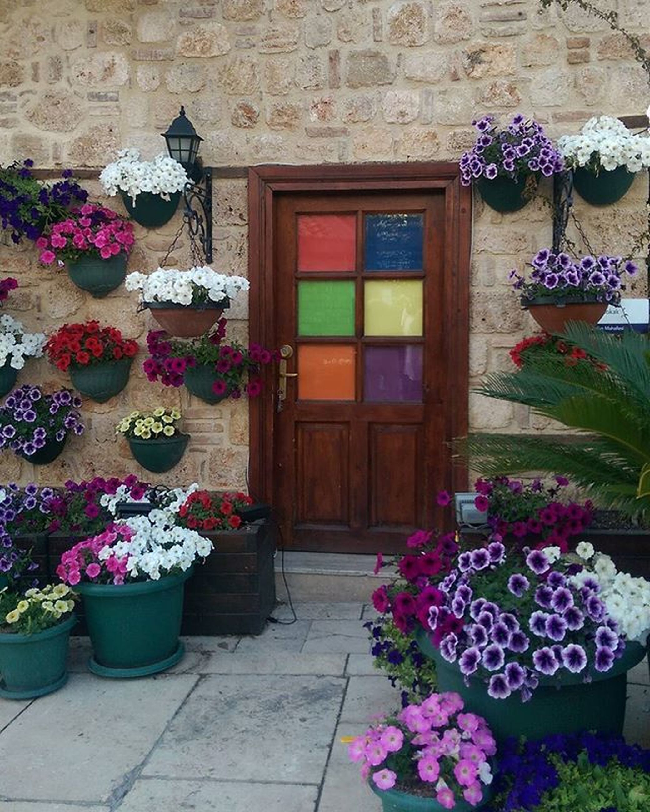 flower, potted plant, built structure, architecture, plant, building exterior, window, door, house, flower pot, decoration, multi colored, freshness, entrance, fragility, growth, no people, petal, day, wall - building feature