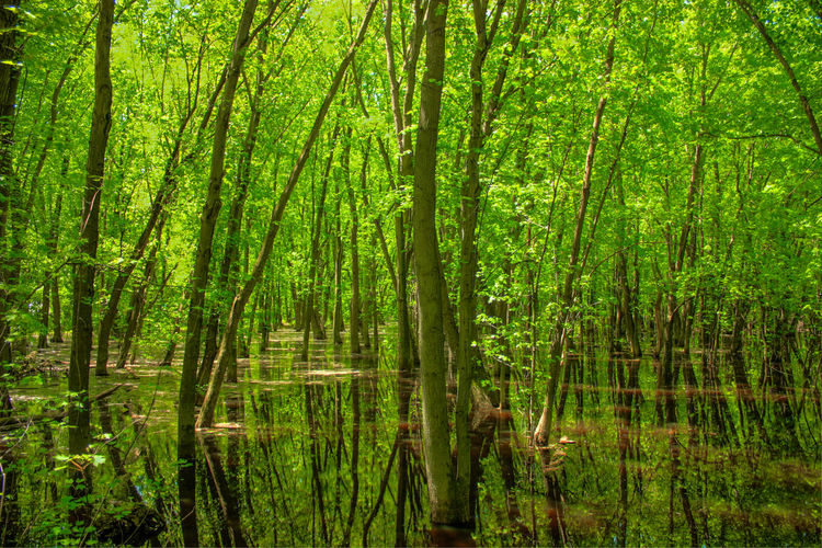 Bamboo - Plant Beauty In Nature Day Forest Grass Green Color Growth Lake Landscape Lush Foliage Marsh Nature No People Outdoors Reflection Scenics Swamp Tranquility Tree Water
