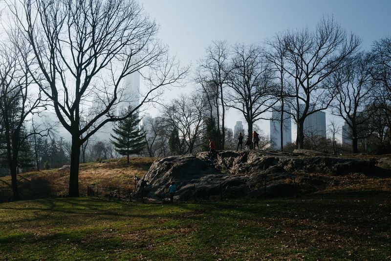 Central Park, January 2017 Winter New York City Manhattan Central Park LEICA Q Leicaq Grass Tree Sky No People Nature Bare Tree Outdoors Beauty In Nature Day