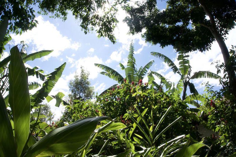 We participated the coffee tour at Jocotenango, Guatemala. Beauty In Nature Coffee Tree Coffeeplantation Freshness Green Color Guatemala Jocotenango Laazotea Leaf Nature Plant Sky Travelphoto Tree