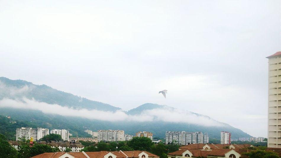 Morning clouds over the hills. Relaxing Taking Photos Enjoying Life Lifeisbeautiful Urban Life Randomshot Urban Nature Wildlife & Nature Morning Good Morning!