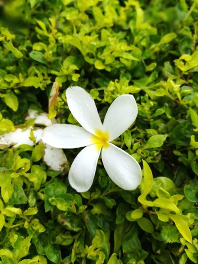 Flower Leaf Close-up Plant Nature Flower Head No People Day Beauty In Nature Outdoors Food Freshness