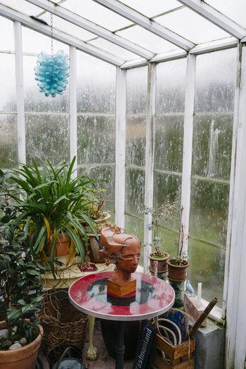Österlen, Sweden Decoration Glasshouse Interior Outhouse Plants Sculpture Sweden Table Winter österlen