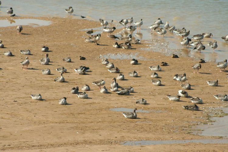 High angle view of ducks resting on beach