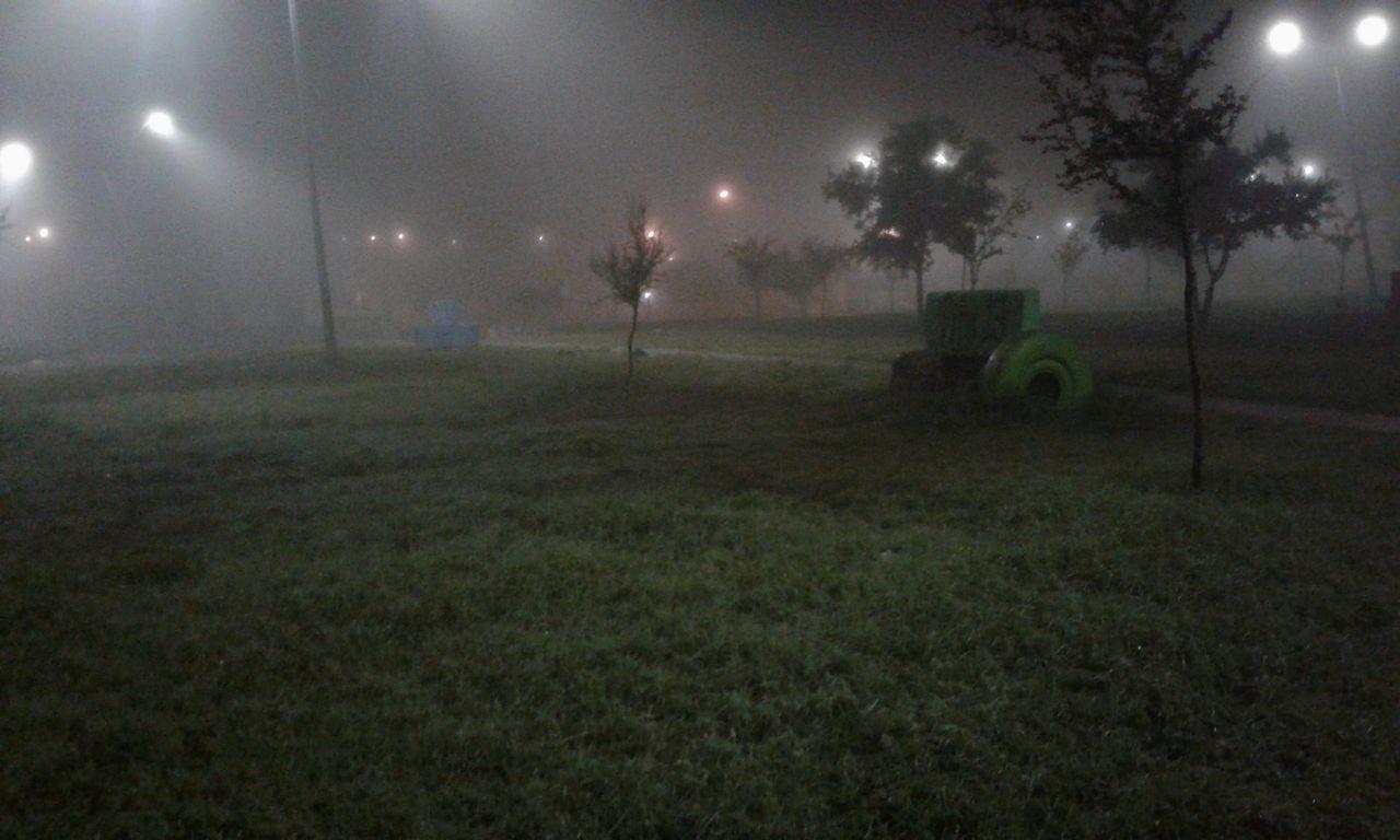 tree, night, field, grass, illuminated, landscape, nature, outdoors, no people, fog, moon, beauty in nature, sky