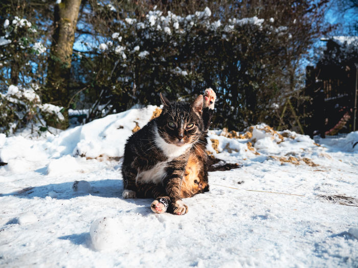 View of a cat on snow covered landscape