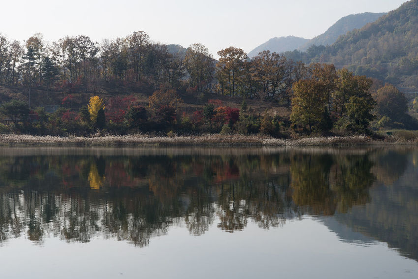 autumn landscape of Busodamak, a beautiful lake located in Okcheon, Chungbuk, South Korea Autumn Busodamak Okcheon Autumn Autumn Lake Beauty In Nature Change Day Lake Lake In Autumn Lake In The Morning Morning Lake Mountain Nature Outdoors Real People Reflection Scenics Sky Tranquil Scene Tranquility Tree Water