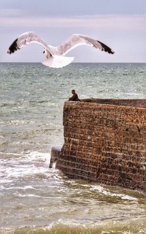 Scandalous ! Attack of a Eu Monster Gull on English Fisherman in Brighton England United Kingdom Gulls Gulls In Flight Ocean Ocean View Fishing Global Photographer Works Exhibition Global Photographers Alliance Get Back Control of the Country ! Showcase June Adventure Club