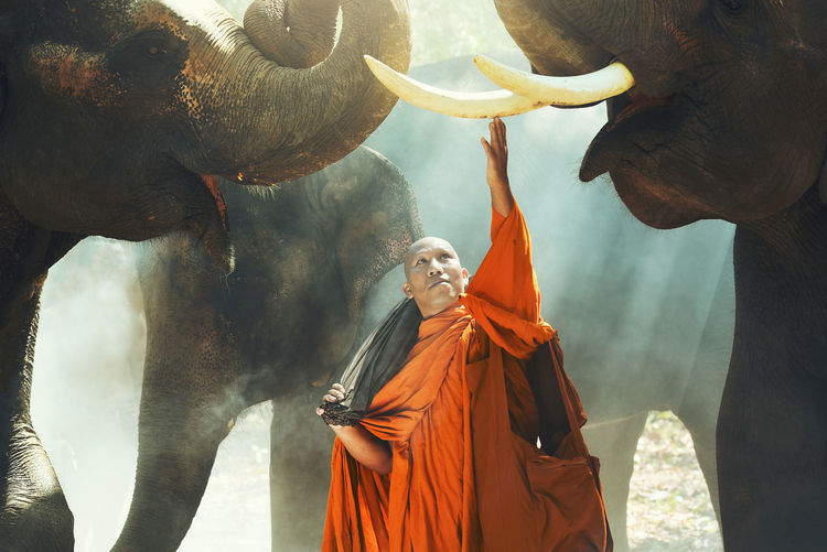 Monk Standing Amidst Elephants