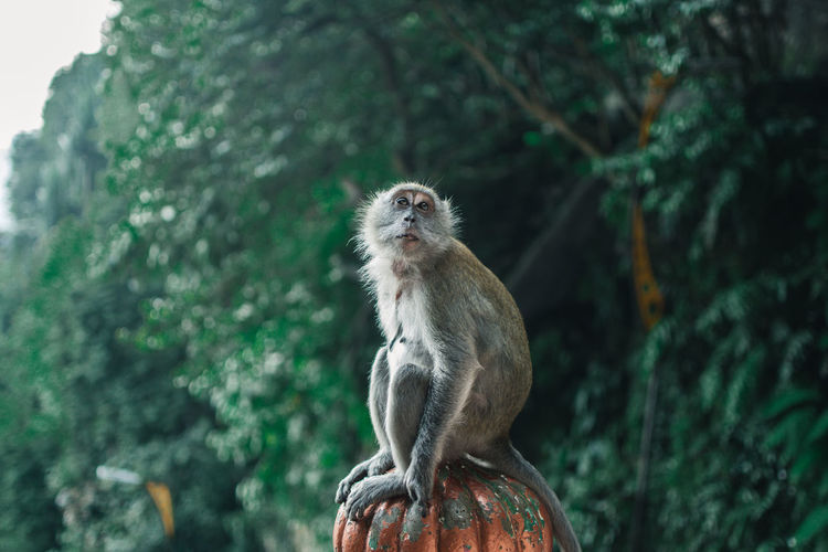 Monkey sitting on metal against tree