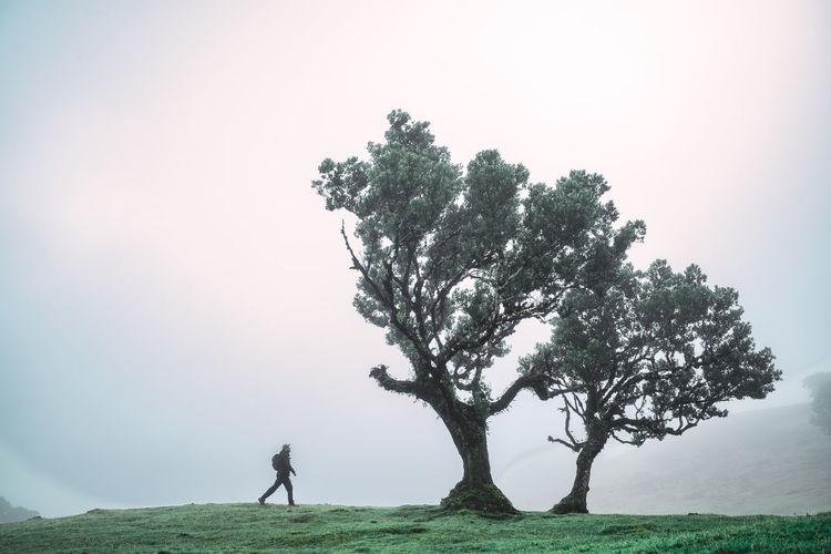 Man walking towards a laurel tree on field against sky in fog