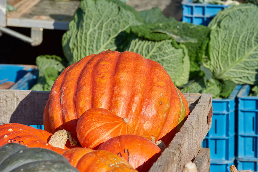 Green and orange pumkins in a wooden crate with cabbage heads in the background. Colorful Eatng First Eyeem Photo Freshness Green Color Healthy Local Landmark Low Carb Nature Nature_collection Orange Color Pumpkin RGanimals Vegetable