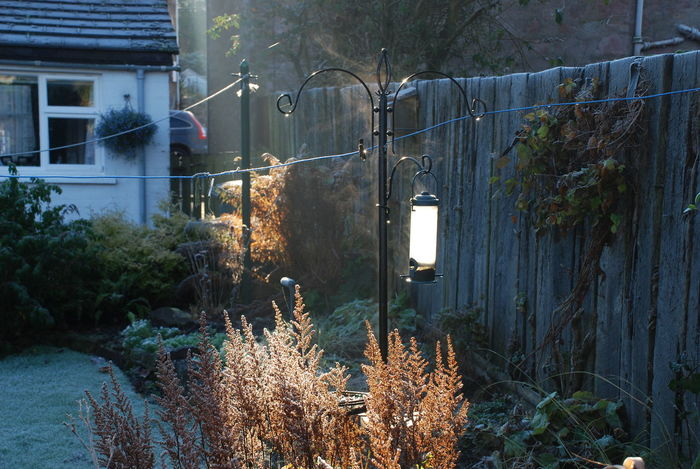 Frosty Morning Morning Light Architecture Bird Feeder Hanging Building Exterior Built Structure Day Garden House Illuminated Nature No People Outdoors Plant Tree