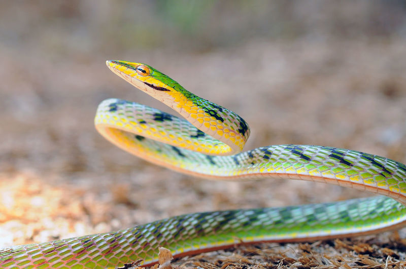 Close-up of snake on field