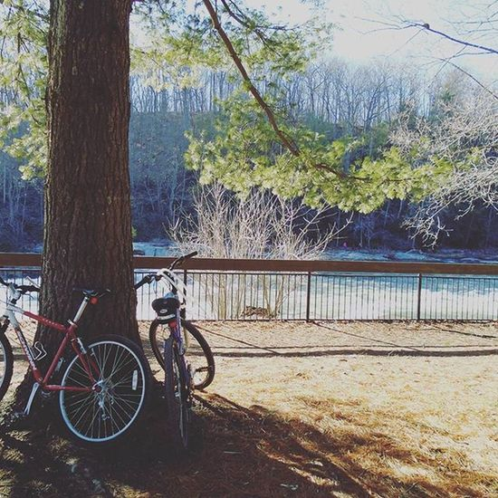 Bikes and trees and bike and trees 🌻🌞⛺🌞🌻 Ohiopylestatepark Sundaze