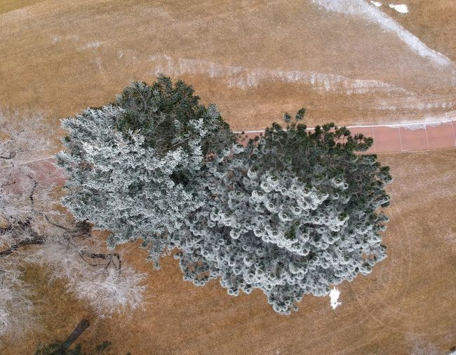 Bird's eye: Frozen Trees Top Perspective Drone  Nature Sand No People Day Salt - Mineral Growth Outdoors Landscape Beauty In Nature Tree