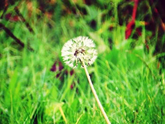 Hello World De Natuur Op Z'n Best  Bloem Flower First Eyeem Photo