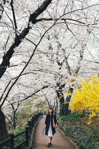 Sakura in my heart Plant Tree Real People One Person Lifestyles Flower Leisure Activity Flowering Plant Women Walking Full Length Adult Nature Day Beauty In Nature Growth Standing Young Women Young Adult Springtime Outdoors Cherry Blossom Cherry Tree Change Sakura