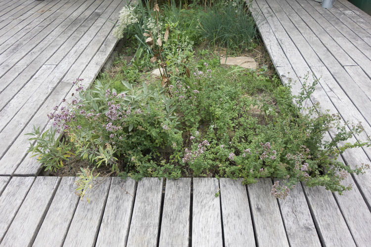 High angle view of flowering plants by footpath