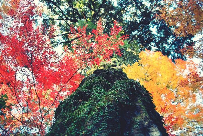 EyeEm Nature Lover Japan Colors TreePorn 35mm Film Nikonf2 もう冬も終わりかけですけど🙄 Pastel Power 日本の秋はいいだろう From My Point Of View Film Nature's Diversities Ultimate Japan