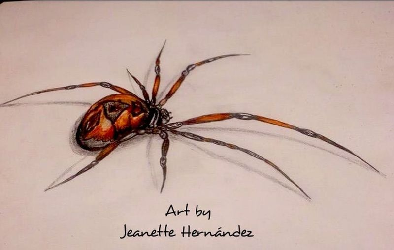 Spider My Drawing Colored Pencil Shadows