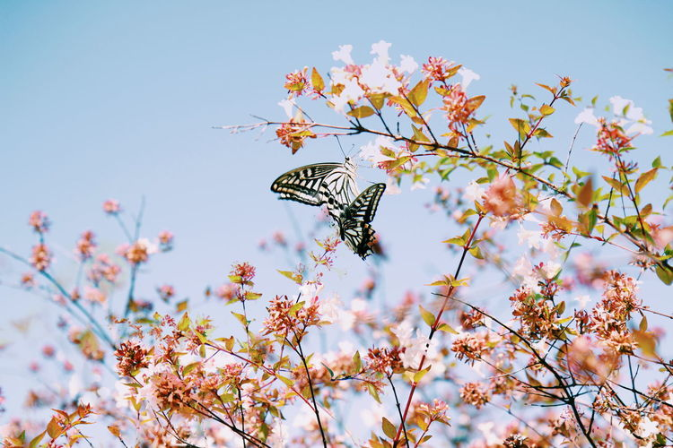 Close-Up Of Butterfly Pollinating On Flower Against Sky