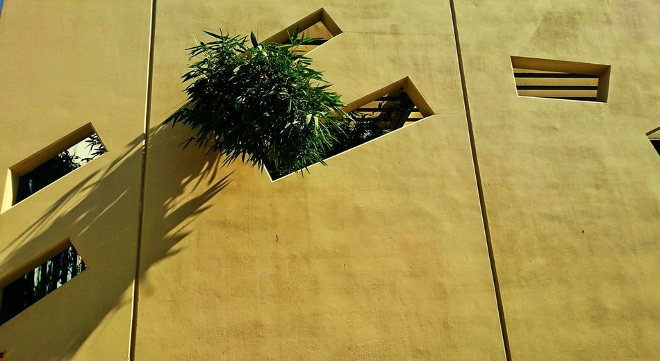 Shadow Plant No People Architecture Tree Xperia X Sony Xperia EyeemPhilippines Mobilephotography Eyeem Philippiness EyeEm Phillippines Eyeem Philippines