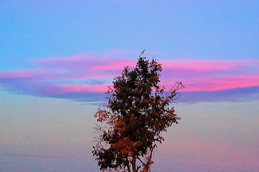 So many words to say and no ways to say them Sky Nature Plant Beauty In Nature Tree No People Low Angle View Outdoors Scenics - Nature Sunset Cloud - Sky Tranquility Pink Color