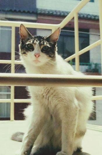 Ramona. The Monkeys Cat Family Cat Adorable