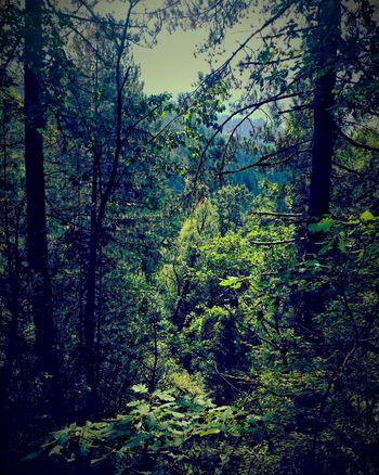 Beauty In Nature Outdoors Nature Tree No People Vovousa Zagoroxoria,greece Tranquility Treetop Zagori