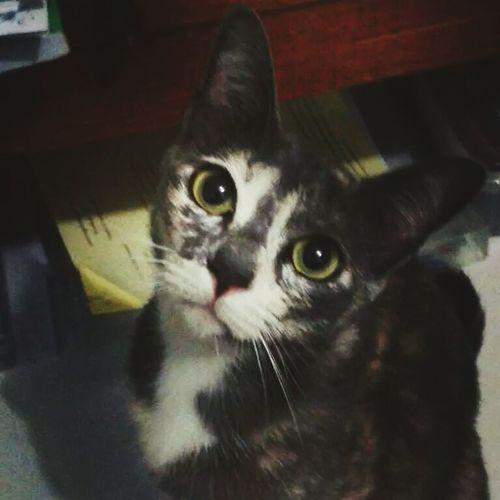 KawLham That's Me Hello World Cat