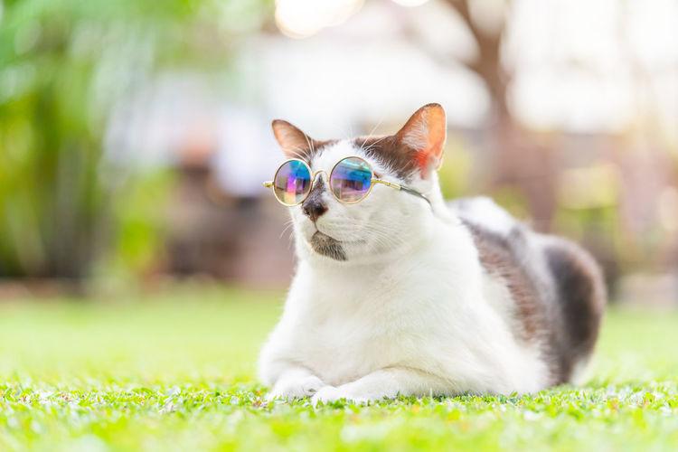 Cat relaxing in a field