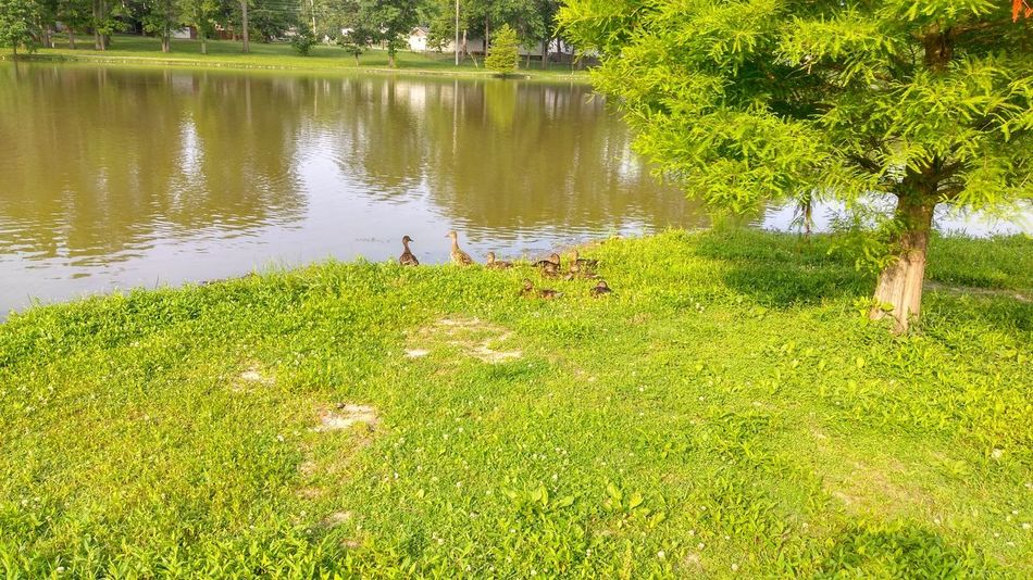 The Purist Ducks And Geese? Family And Friends EyeEm Animal Lover We Are Nature Waters Edge Reflection_collection