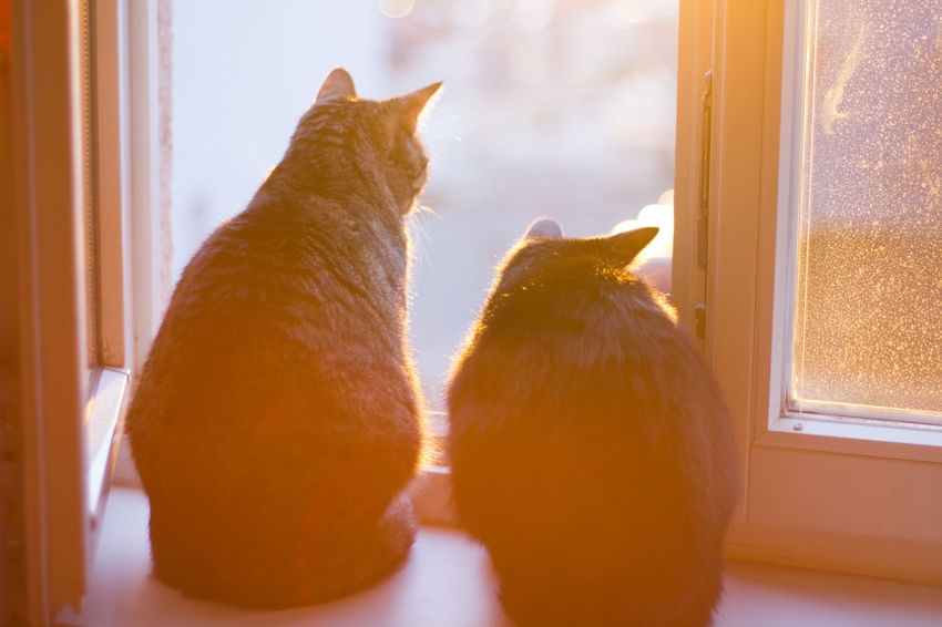 Animal Themes Black Cat Cat Domestic Animals Domestic Cat Dreamy Feline Hazy  Indoors  Looking Out The Window Mammal No People Pets Tabby Cat Two Animals Window
